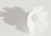 flower61.jpg